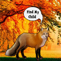Find The Fox Child